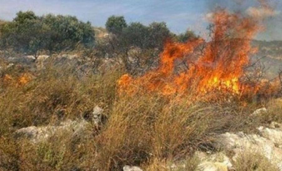الدفاع المدني يخمد حريق أعشاب وأشجار في بيرين