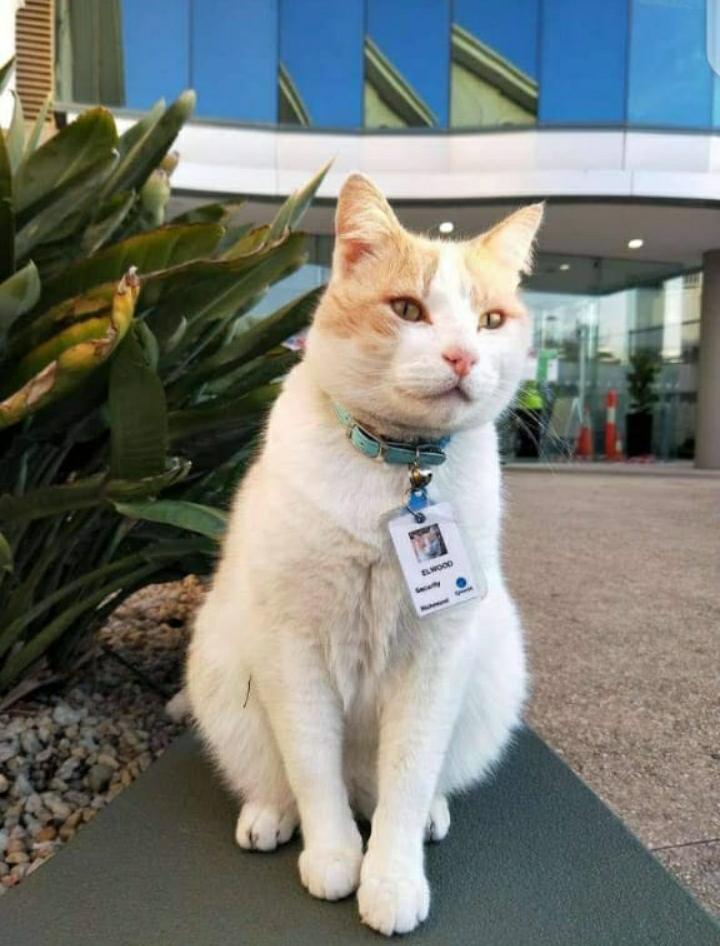 تعيين قط بوظيفة حارس أمن في مستشفى