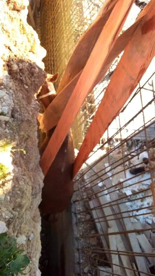 انقاذ حصان سقط داخل حفرة في عمان