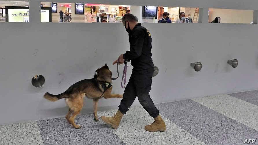 استخدام الكلاب في المطارات للكشف عن كورونا... دقتها تصل إلى 96 بالمئة