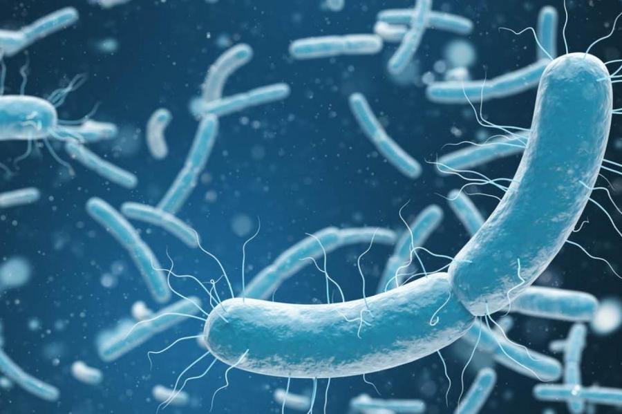 دراسة أردنية تكشف سبب ظهور بكتيريا تقاوم المضادات